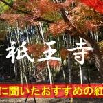京都通に聞いたおすすめの紅葉名所《祇王寺》