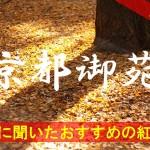 京都通に聞いたおすすめの紅葉名所《京都御苑》