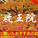 京都通に聞いたおすすめの紅葉名所《鹿王院》