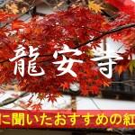 京都通に聞いたおすすめの紅葉名所《龍安寺》