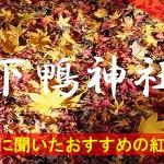 京都通に聞いたおすすめの紅葉名所《下鴨神社》