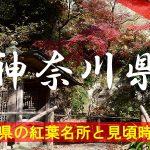 神奈川県の気になる紅葉名所と見頃時期は?