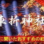 京都通に聞いたおすすめの紅葉名所《車折神社》