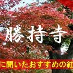 京都通に聞いたおすすめの紅葉名所《勝持寺》