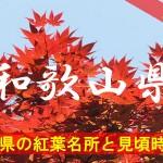 和歌山県の気になる紅葉名所と見頃時期は?