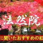 京都通に聞いたおすすめの紅葉名所《法然院》