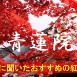 京都通に聞いたおすすめの紅葉名所《青蓮院》