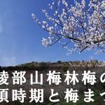 綾部山梅林の見頃時期と立ち寄りたい世界の梅公園とランチ情報