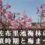 佐布里池梅林の見頃時期と梅まつり・開花情報
