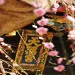 北野天満宮の梅の見頃時期と梅まつり・開花情報