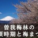富士山と箱根山の借景が最高!曽我梅林の小田原梅まつり