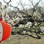 青谷梅林の梅の見頃時期と梅まつり・開花情報