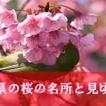 沖縄県でも花見ができる!桜の名所と見頃情報