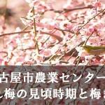 名古屋市農業センターのしだれ梅の見頃時期と梅まつり
