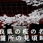 奈良県の吉野山など桜名所42箇所の見頃時期