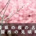 長崎県の立山公園など桜の名所44箇所の見頃時期