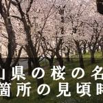 岡山県の鶴山公園など桜名所80箇所の見頃時期