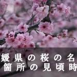 愛媛県の積善山など桜名所78箇所の見頃時期