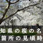 高知県のひょうたん桜など桜名所35箇所の見頃時期