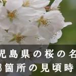 鹿児島県の桜の名所68箇所の見頃時期