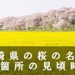 宮崎県の母智丘公園などの桜名所83箇所見頃時期
