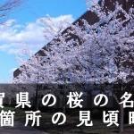 佐賀県の旭ヶ岡公園など桜の名所48箇所の見頃時期