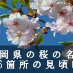 福岡県の舞鶴公園など桜の名所116箇所の見頃時期