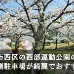 福岡市西区の西部運動公園の桜は西側駐車場が綺麗でおすすめ