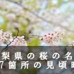 山梨県のわに塚など桜の名所117箇所の見頃時期