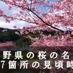 長野県の高遠城址公園など桜の名所197箇所の見頃時期