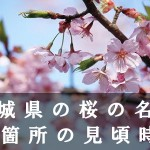 茨城県のかみね公園など桜の名所51箇所の見頃時期