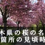 栃木県のかしの森公園など桜の名所71箇所の見頃時期