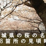 宮城県の船岡城址など桜の名所118箇所の見頃時期