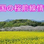 今年の全国桜前線!予想開花日・満開日と見頃時期