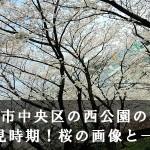 福岡市中央区の西公園の桜のお花見時期!桜の画像と一緒に