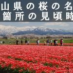 富山県の朝日山公園など桜の名所80箇所の見頃時期