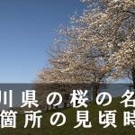 石川県の兼六園など桜の名所58箇所の見頃時期