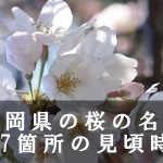 静岡県の富士山など桜の名所167箇所の見頃時期