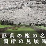 山形県の馬見ヶ崎 など桜の名所42箇所の見頃時期