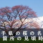 岩手県の展勝地など桜の名所50箇所の見頃時期