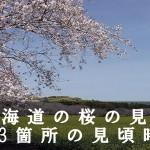 北海道の松前公園など桜の名所133箇所の見頃時期